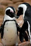 Happy Penguin Awareness Day